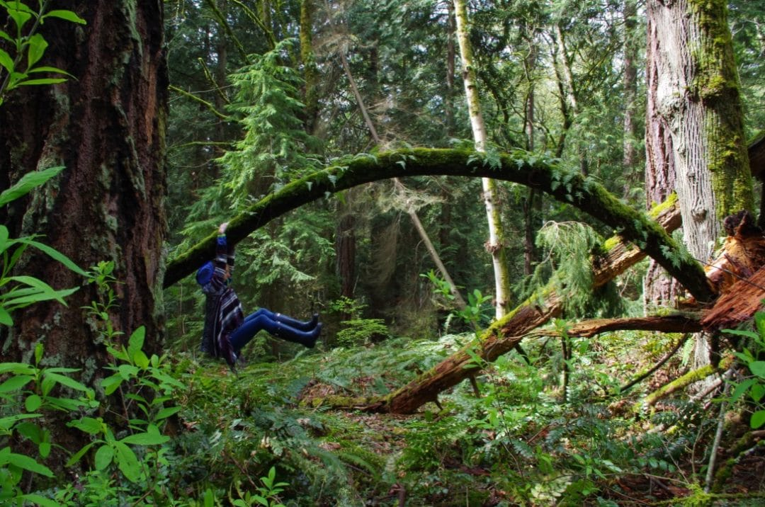 TOP 5 LEAFY PARKS IN SEATTLE - Idealish