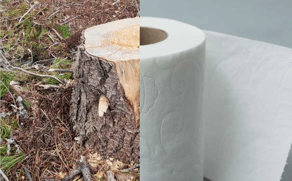 deforestation toilet paper